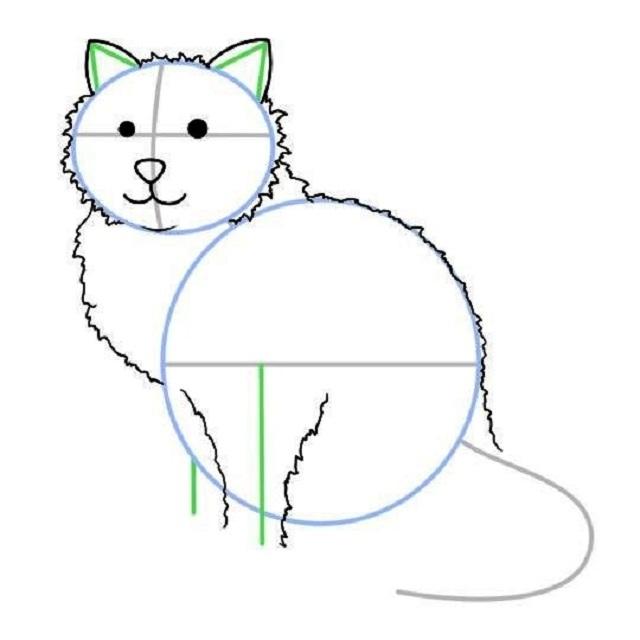 Как нарисовать сидящую кошку: набросок — детали тела