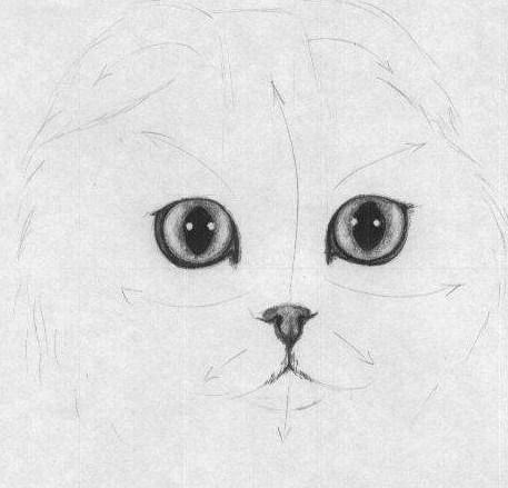 ushki-budut-slivatsya-s-konturom-golovi Как нарисовать котенка карандашом поэтапно для начинающих и детей? Как нарисовать котенка аниме с милыми глазками, мордочку котенка?