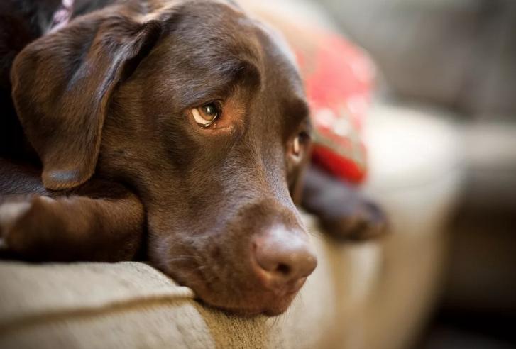 Недержание кала и мочи у собаки