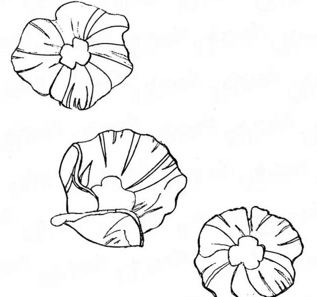 Прорисовываем цветок