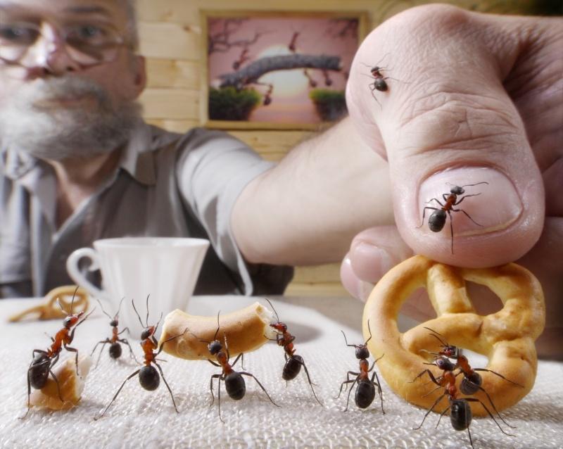 Что отпугивает домашних муравьев?