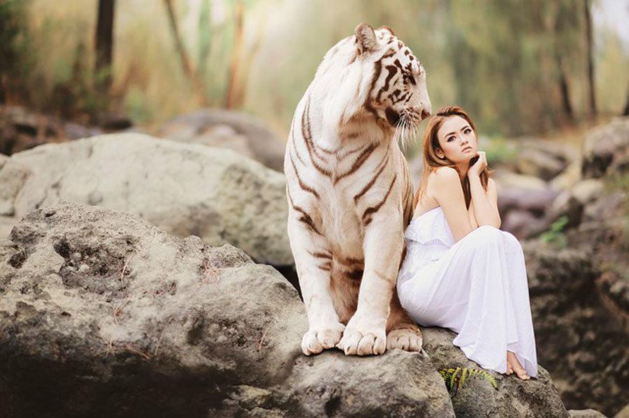 Тигр в женском сне может предвещать ссору с партнером.