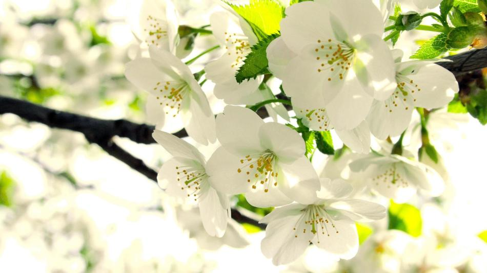 В время цветения необходима обработка