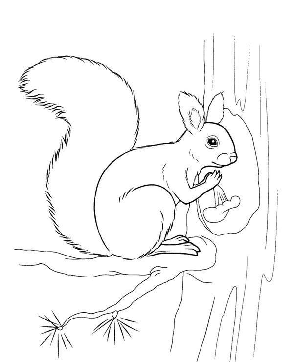 58b1620c77c391a0239ac13706e1ce05 Как нарисовать белку поэтапно карандашом для детей и начинающих? Как нарисовать белку из сказки о царе Салтане и на дереве?
