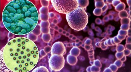 Стрептококковая инфекция горла вызывается бета-гемолитическим стрептококком группы а подробнее: http://www.infmedserv.ru/stati/streptokokkovaya-infekciya-gorla