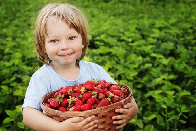 Ранние сорта, выращенные на азотистых удобрениях, ребенку не подходят.