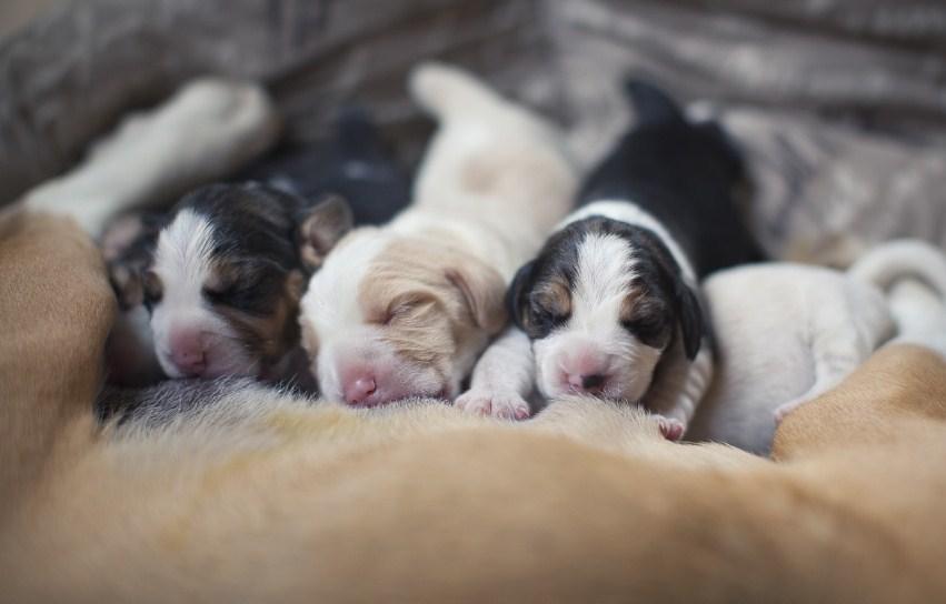 Регулярно осматривайте собак