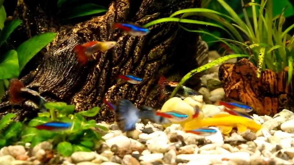 Мелкие аквариумные рыбы