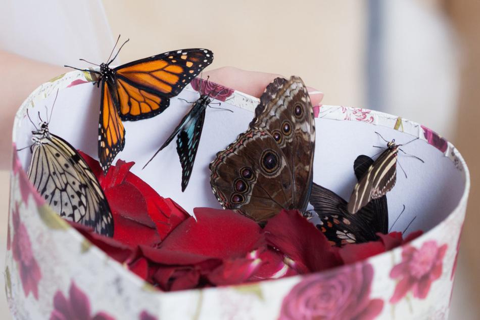 Романтичная открытка-валентинка в виде коробки с бабочками - подарок, который не оставит девушку равнодушной