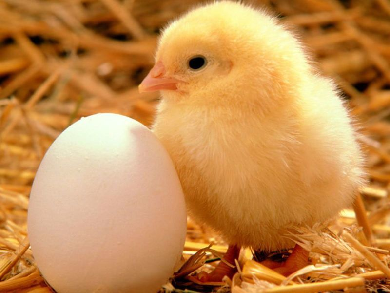 Куринные яйца - отличный завтрак