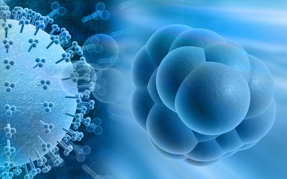 Днк-содержащий цитомегаловирус