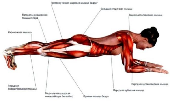 Какие мышцы работают при выполнении техники «планка на локтях»