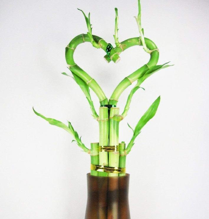 Растение бамбук — сильная картинка-амулет