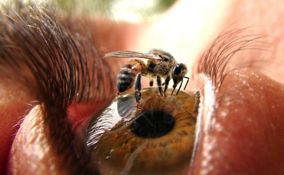 Апифобия - боязнь пчел и ос.