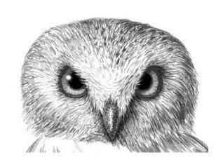 dobavim-neskolko-kroshechnih-ovalov-na-peryah-na-lbu-i-po-bokam-golovi Как рисовать сову карандашом поэтапно для начинающих и детей? Как рисовать по клеточкам сову, красками?