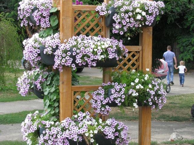 Английский интернет магазин цветов для сада и дачи, цветы мимоза в красноярск купить киев