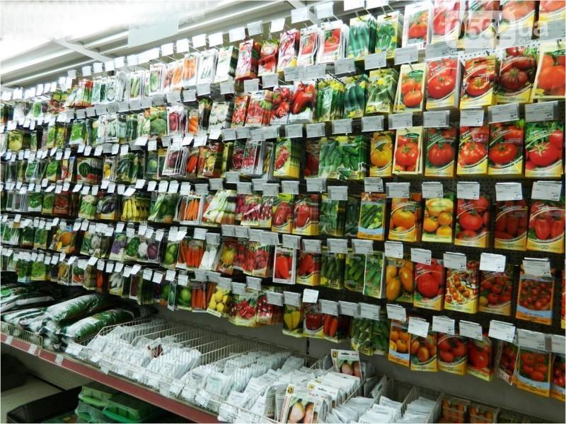Качественные семена - половина успеха в выращивании помидор
