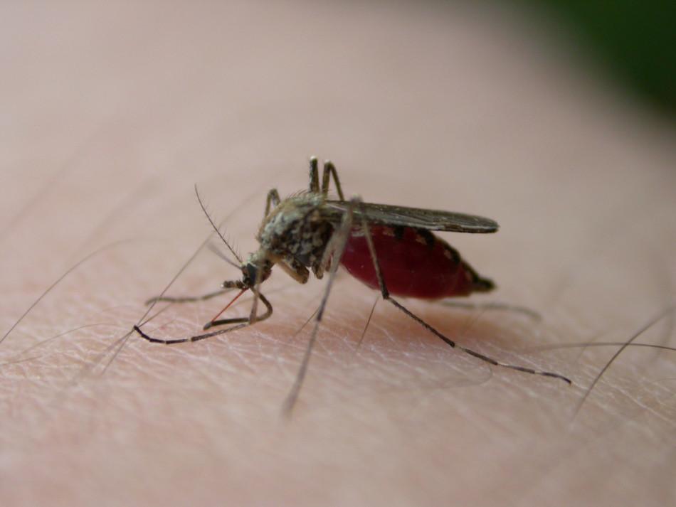 Что делать, если ребенка покусали комары?