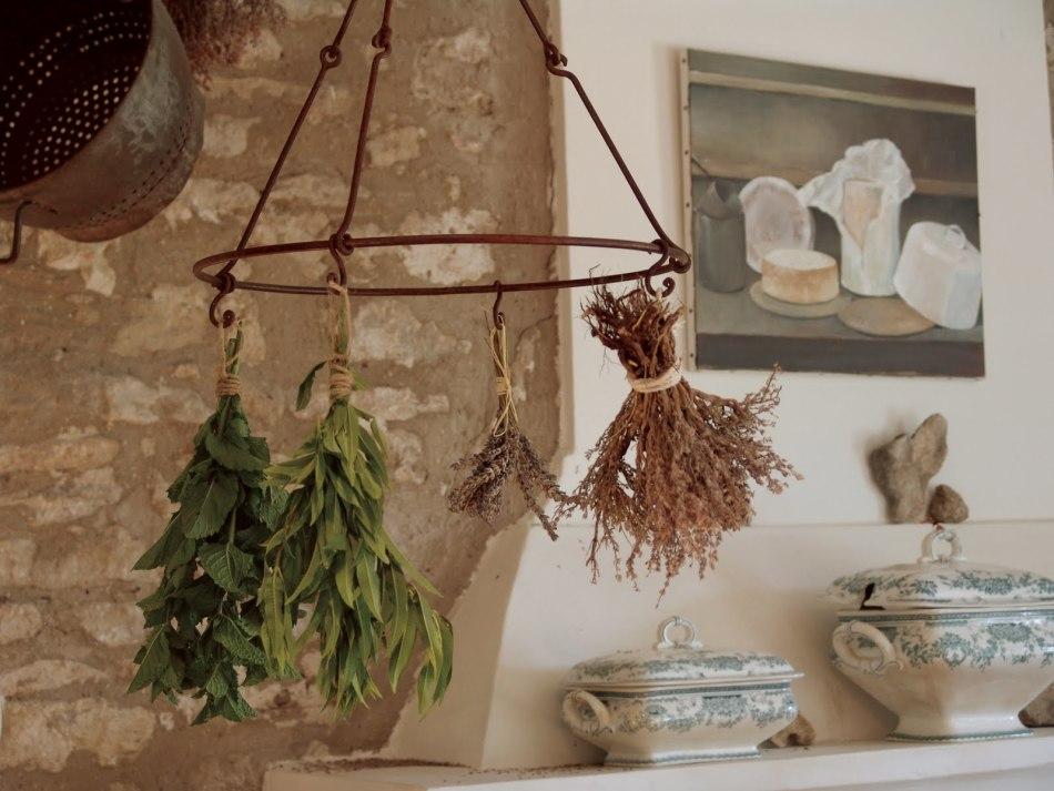 Лекарственные травы в домашней аптеке