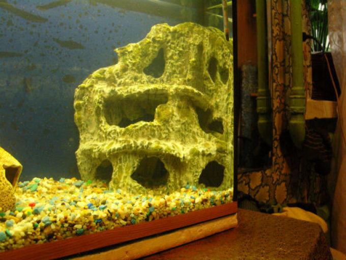 Готовый вид фона в аквариуме
