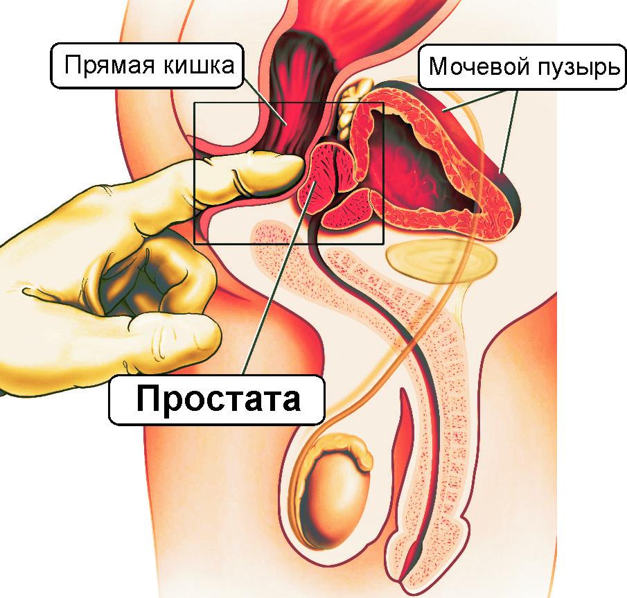 Простата у мужчин и видеоурок эротического массажа простаты индивидуалки в черкассах