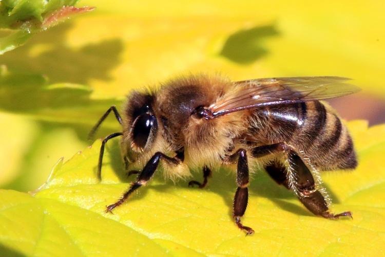 Пчела говорит о хорошем семейном выборе спутника