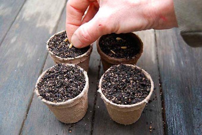 Высаживание семян