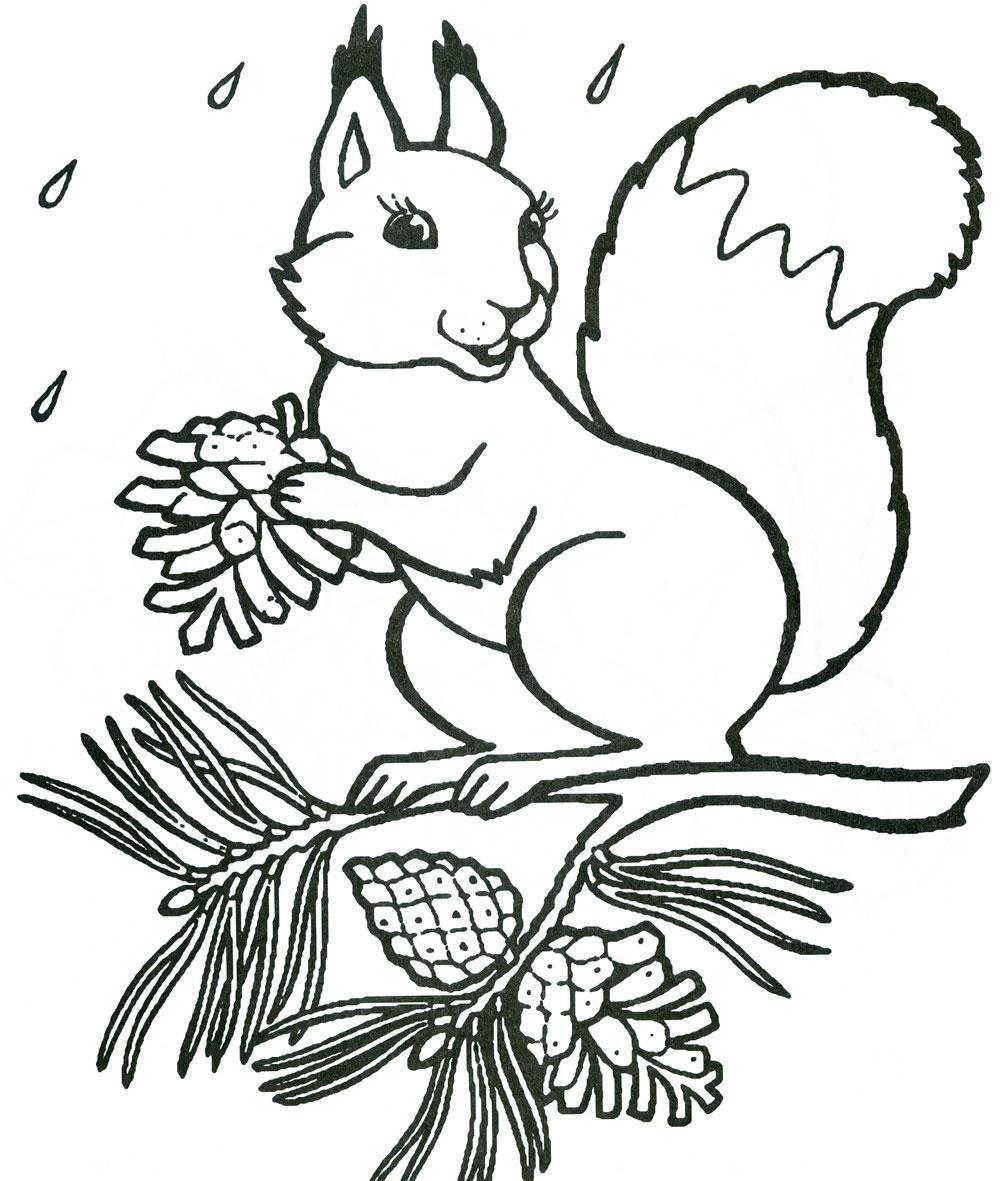 651d965db2b0f21f1de1e020c75bcfd9 Как нарисовать белку поэтапно карандашом для детей и начинающих? Как нарисовать белку из сказки о царе Салтане и на дереве?