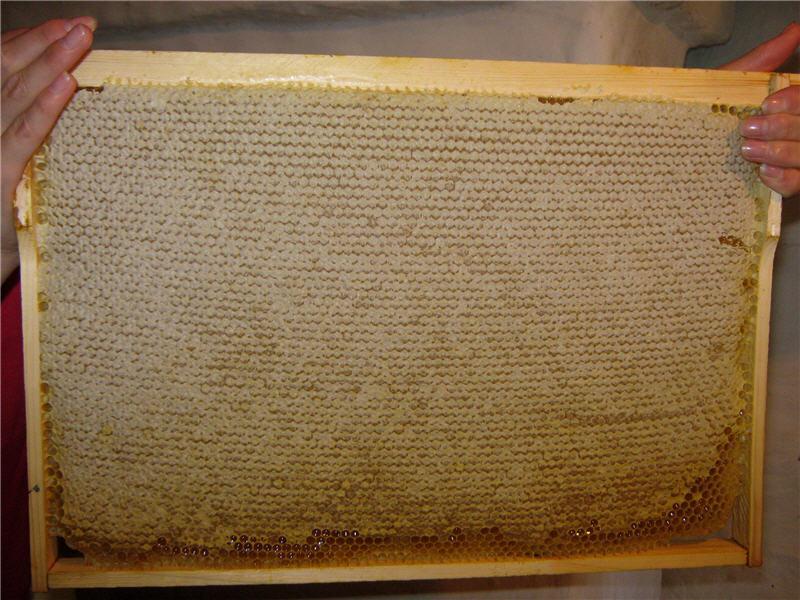 Соты с медом при покупке должны быть запечатаны
