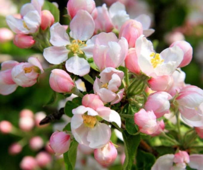 Во время цветения уход так же важен