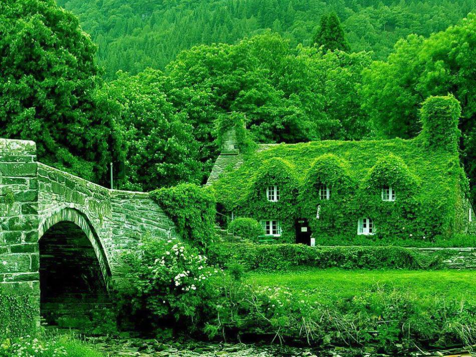 Лечебный зеленый цвет в природе