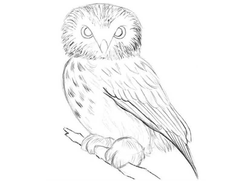 istochnik-sveta-sleva-poyetomu-sprava-ottenok-temnee Как рисовать сову карандашом поэтапно для начинающих и детей? Как рисовать по клеточкам сову, красками?
