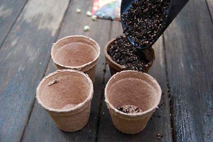 Торфяные горшочки заполняются грунтом