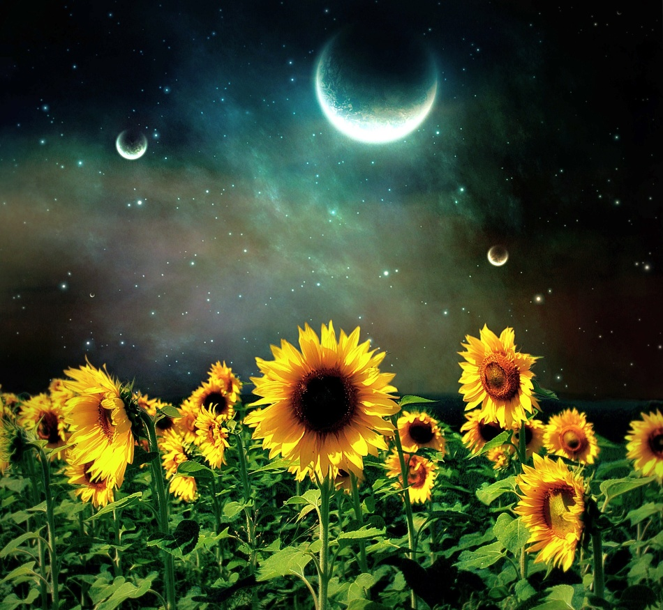 Благоприятные дни для посева цветов по лунному календарю в июле