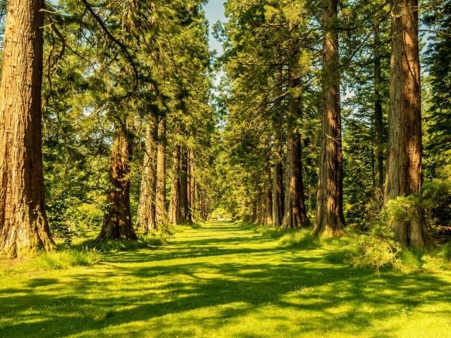 Сонник — снится во сне лес: значение сна. К чему снится гулять ...