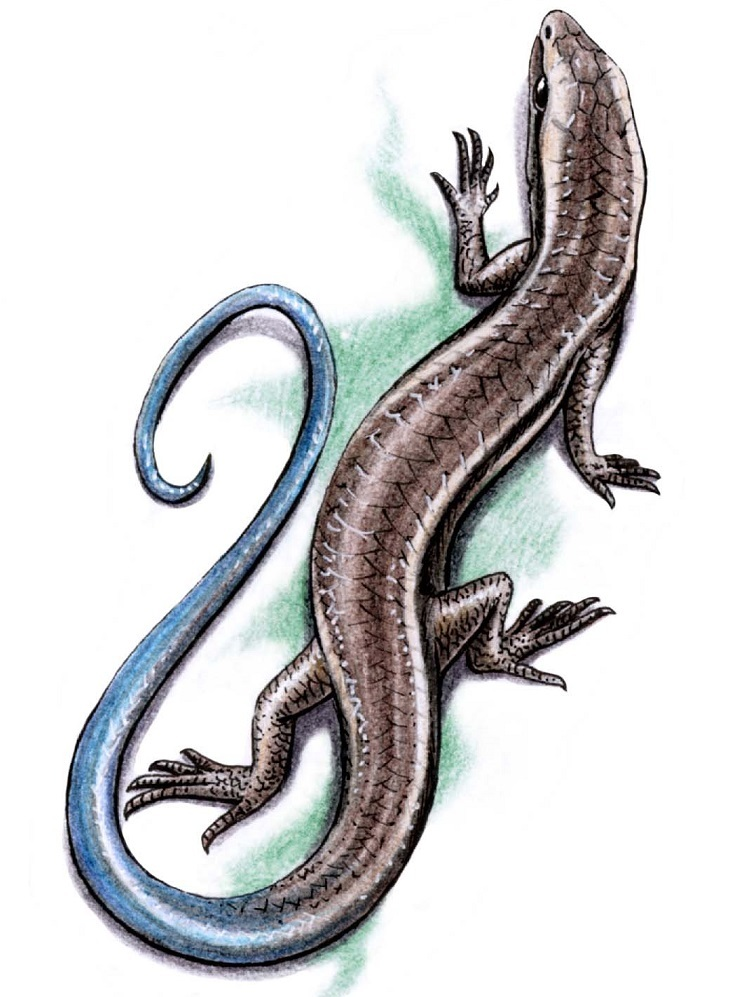 Картинки ящерицы нарисованные