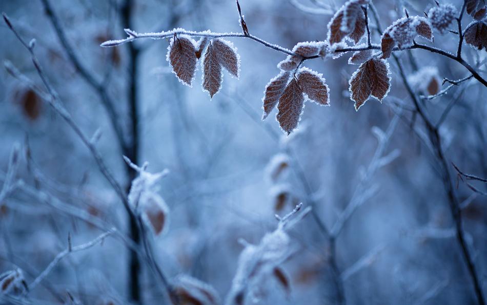 Собрать веточки можно и зимой