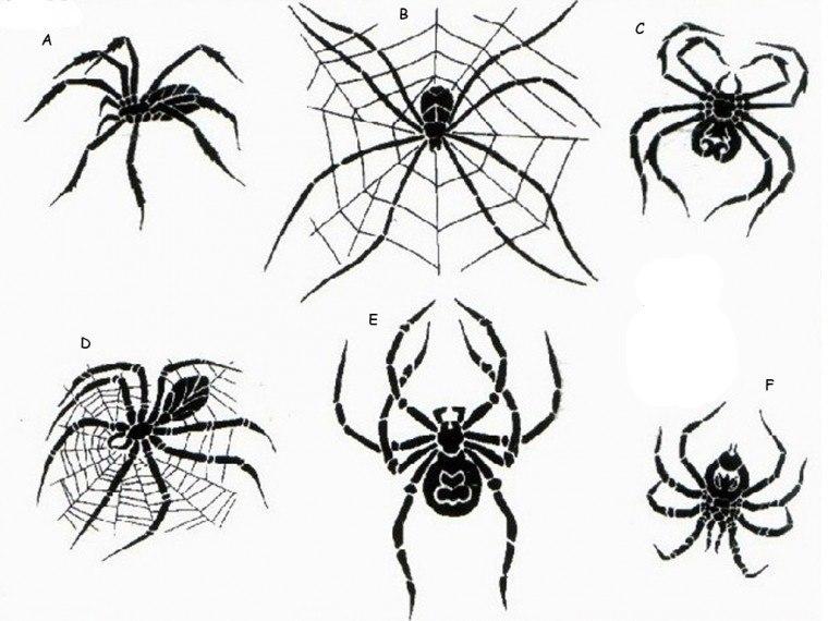собрала воедино картинки с пауками для тату нотки