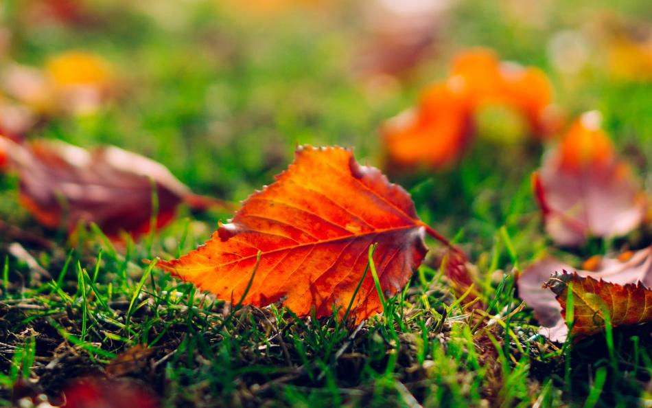 Окрас листьев в оранжевый