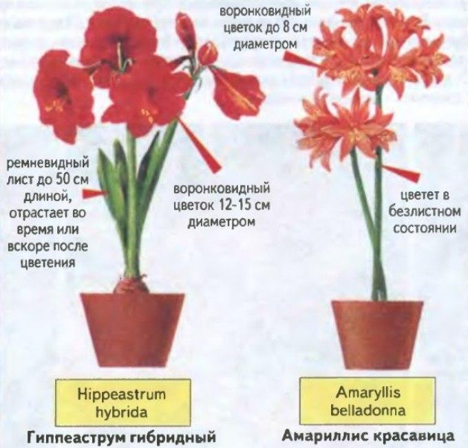 Отличия растений