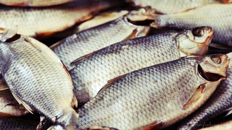 Готовим рыбу к засолке