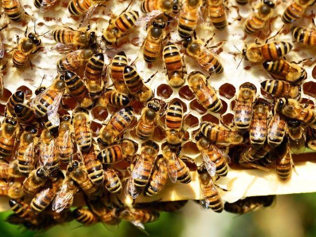 Пчелиный подмор лечение суставов мази для восстановления подвижности суставов