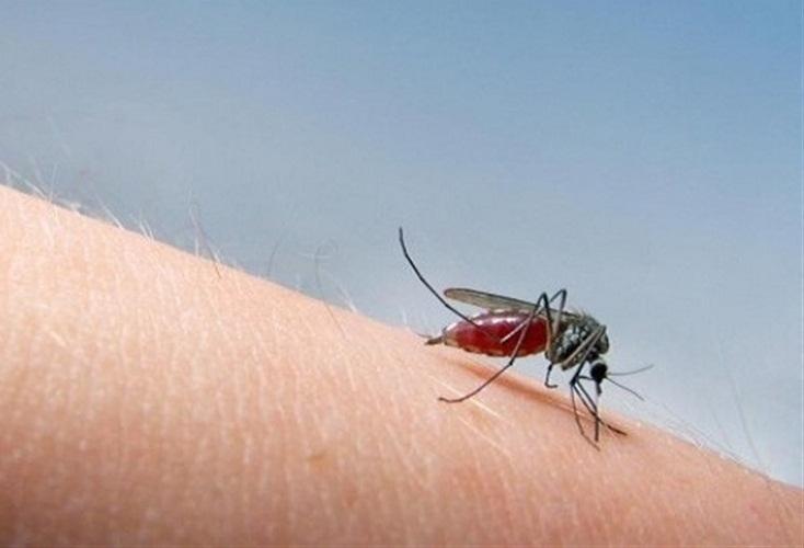 Укусы комаров могут быть опасными