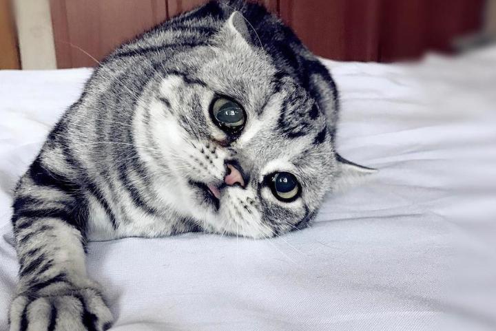 Недержание кала у котенка, кота, кошки