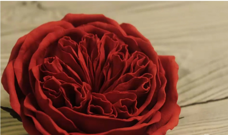 739ba77594156780fa80e781072a1d00 Роза из фоамирана: 3 мастер-класса, 3 красивых розы (фото)