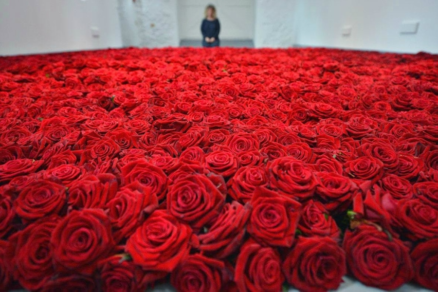 Приснилось много роз, к чему?