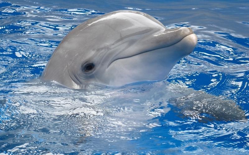 Сонник дельфин в руках