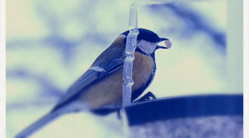 Кормушки для птиц очень важны
