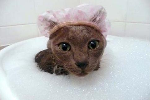 Важно, чтобы во время купания вода не попадала в уши кошки.