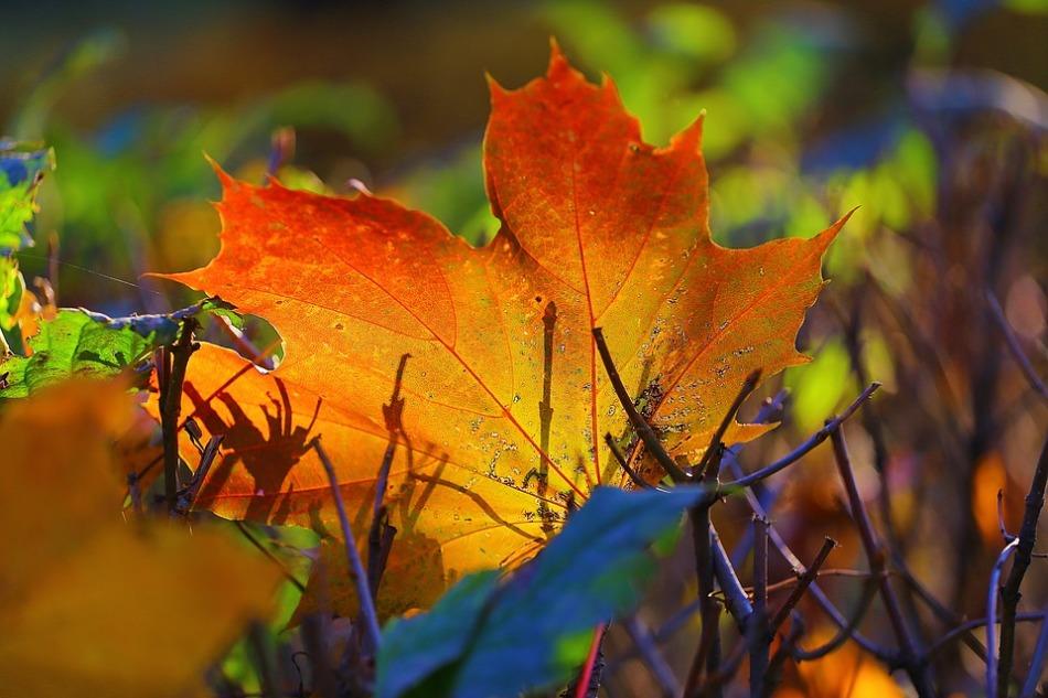 В октябре каждый день можно смотреть за приметами